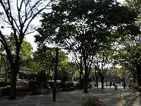 20090429shinjyuku03