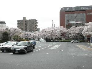 2011kunitachi01