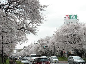 2011kunitachi04