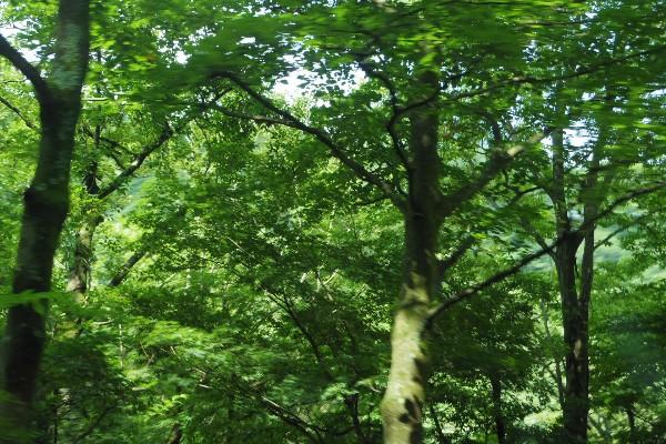 2013kanagawa06